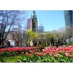 Торонто в мае