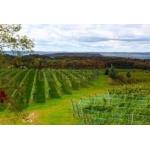 Виноградники Ниагарского полуострова