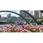 Выходные в Торонто