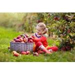 Яблочки наливные...