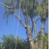 MrTree Care -  Обрезка и вырубка деревьев - Tree Removal,  Trimming